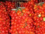 Rajče Principe Borghese  Balení obsahuje 20 semen