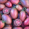 Rajče Purple Russian Plum Balení obsahuje 10 semen