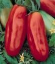 Rajče San Marzano Lampadina Balení obsahuje 20 semen