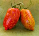 Rajče Striped roman Balení obsahuje 10 semen