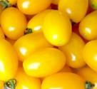 Rajče TAIKO  Balení obsahuje 20 semen