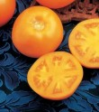 Rajče Tangerine F1  Balení obsahuje 10 semen