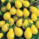 Rajče  Žlutá hruška   Balení obsahuje 20 semen
